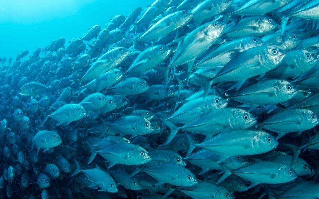 Sea Farming as A Protein Solution